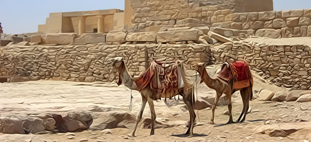 egypte-chameau-mur-pierre-batiment-exterieur