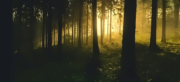 foret-lumiere-soleil-couchant-penombre